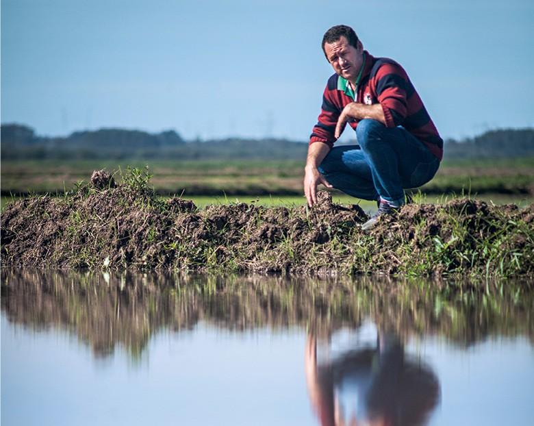 Nilvo Bosa, presidente da cooperativa e aguador das lavouras, confere o nível das taipas para o plantio (Foto: Marcelo Curia)