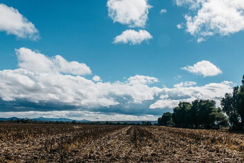 Água da louça para regar plantação: ciência dá alternativas para agricultura sobreviver com seca e crise hídrica