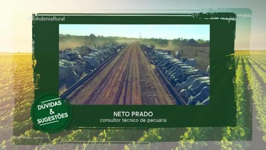 Preço da arroba do boi gordo não vai reduzir em Rondônia, diz consultor