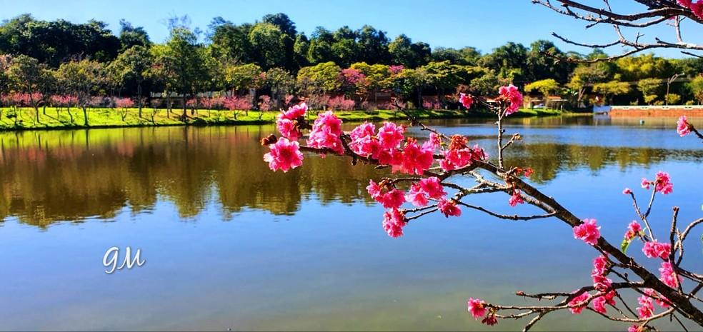 Lago artificial J. K. Williams, em Garça — Foto: Arquivo pessoal/Giuliana Marino