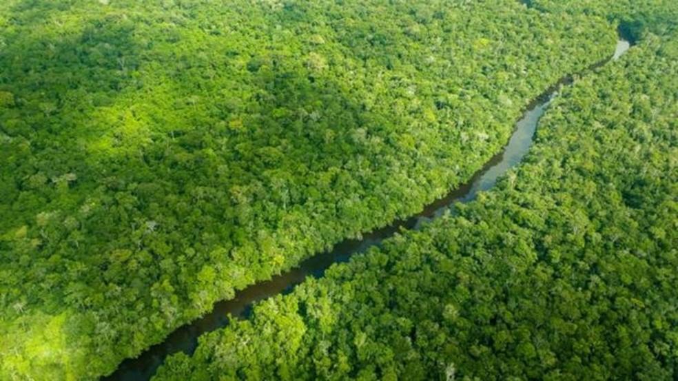 O processo de respiração e transpiração das árvores afeta diretamente o regime de chuvas — Foto: Larissa Rodrigues