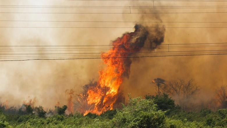 pantanal-incêndio-florestas-queimada (Foto: Chico Ribeiro/Divulgação)