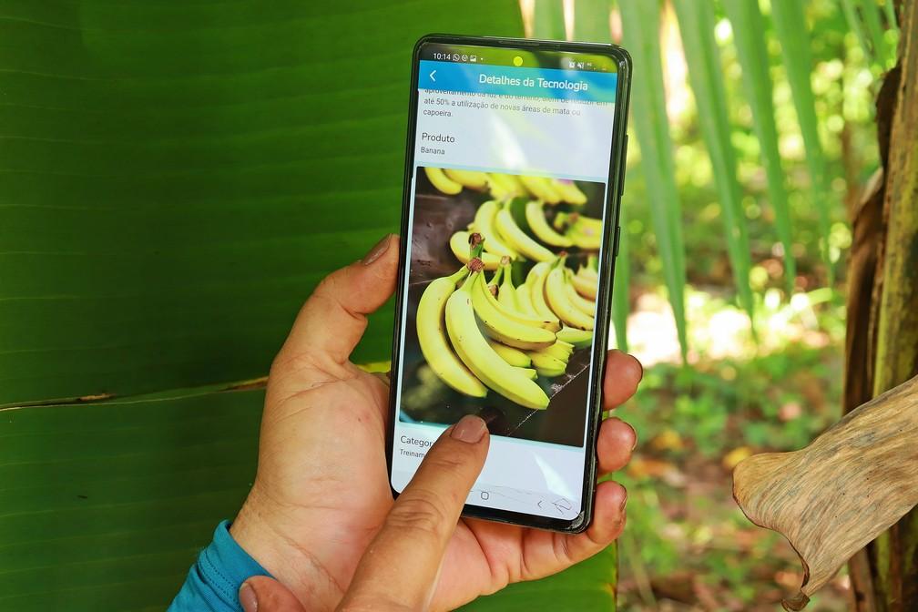 Embrapa lança plataformas com soluções tecnológicas para a Amazônia. — Foto: Ronaldo Rosa