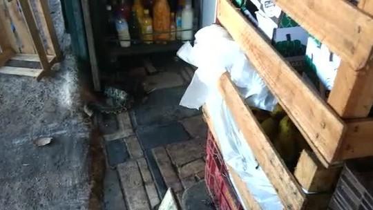 Cascavel é encontrada em banca de frutas, no DF; veja vídeo