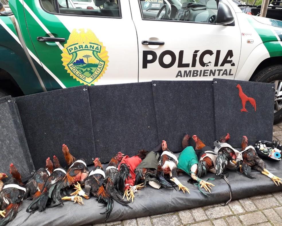 Quatro pessoas são presas em Pérola suspeitos de promover rinhas de galo  — Foto: Divulgação/Polícia Ambiental