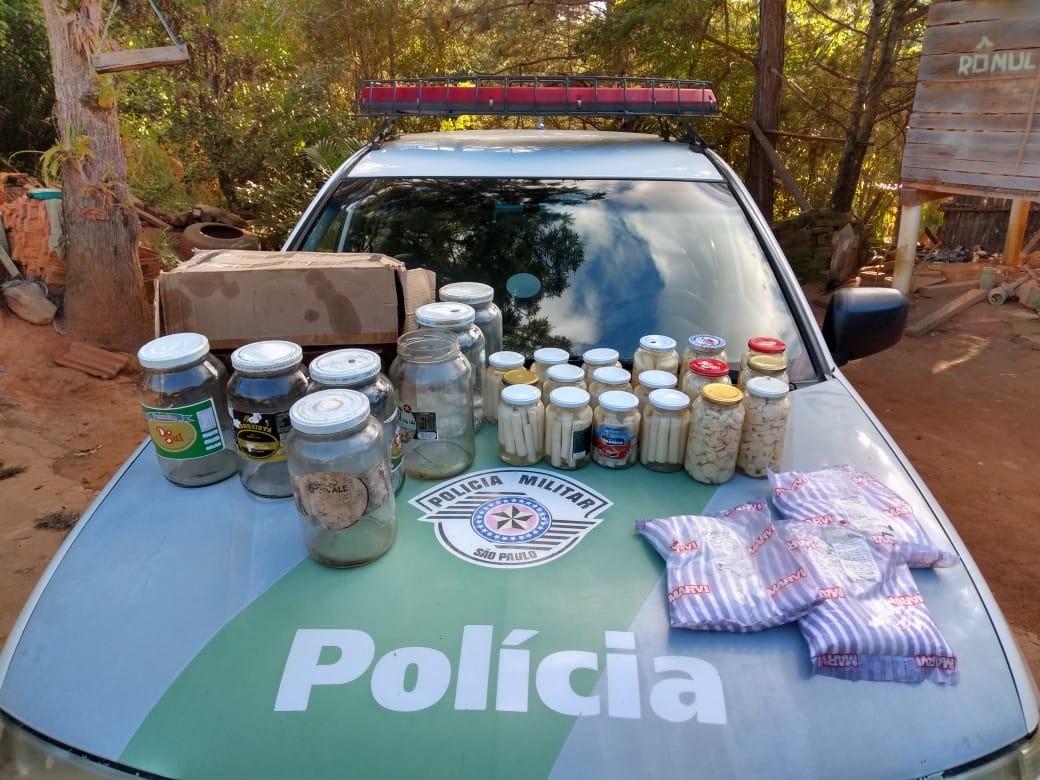 68e0021c7 Apreensões aconteceram na tarde dessa segunda-feira (13) em dois comércios  da cidade. Polícia Ambiental apreende 8