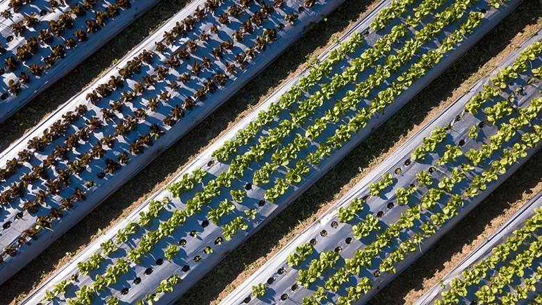 fazenda-sustentavel-2018-sitio-moinho-agro-campo-verde (Foto: Fernando Martinho/Ed. Globo)