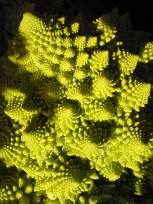 Exemplo de fractal em brócolis romanesco (Foto: Wikimedia Commons)
