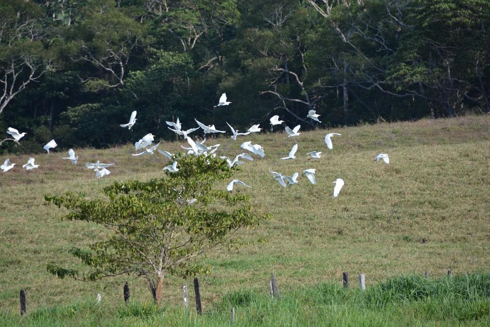 Garças em árvore na zona rural de Porto Velho — Foto: Renata Silva/Arquivo Pessoal
