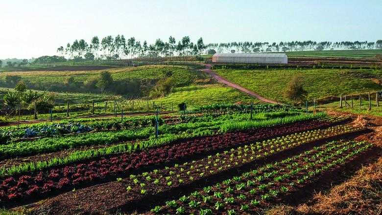 A Fazenda Sta. Julieta Bio é um exemplo do modelo de economia colaborativa, em que os consumidores cadastrados antecipam compras de orgânicos (Foto: Divulgação)