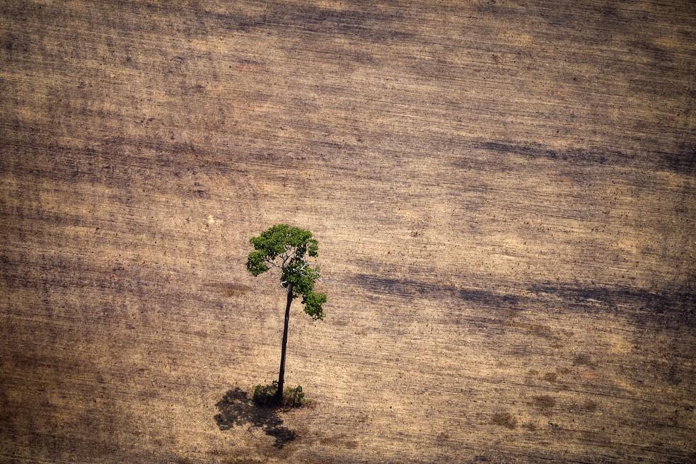 Imagem de área afetada pelo desmatamento na Amazônia — Foto: Raphael Alves/AFP/Arquivo