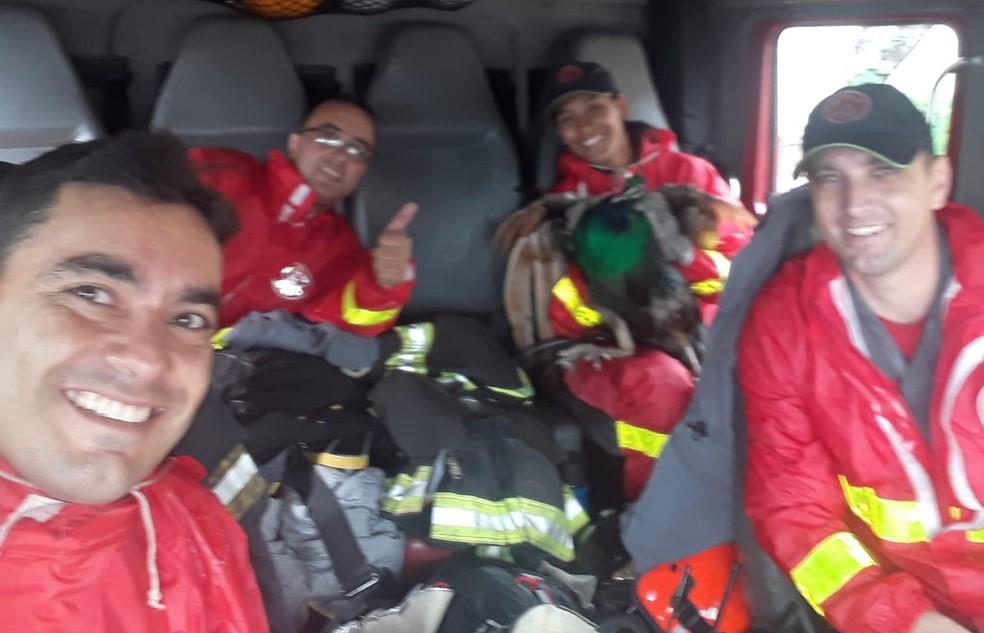 Equipe dos bombeiros resgatou o pavão em Bauru — Foto: Corpo de Bombeiros / Divulgação