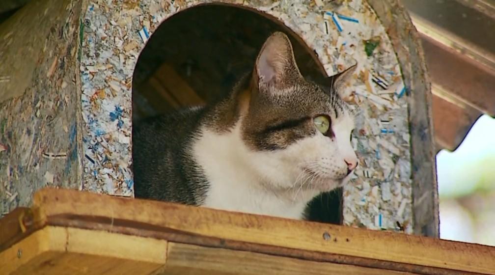 Gato ganhou casa em cima da árvore após fugir de cachorros em São José da Barra (Foto: Reprodução EPTV)
