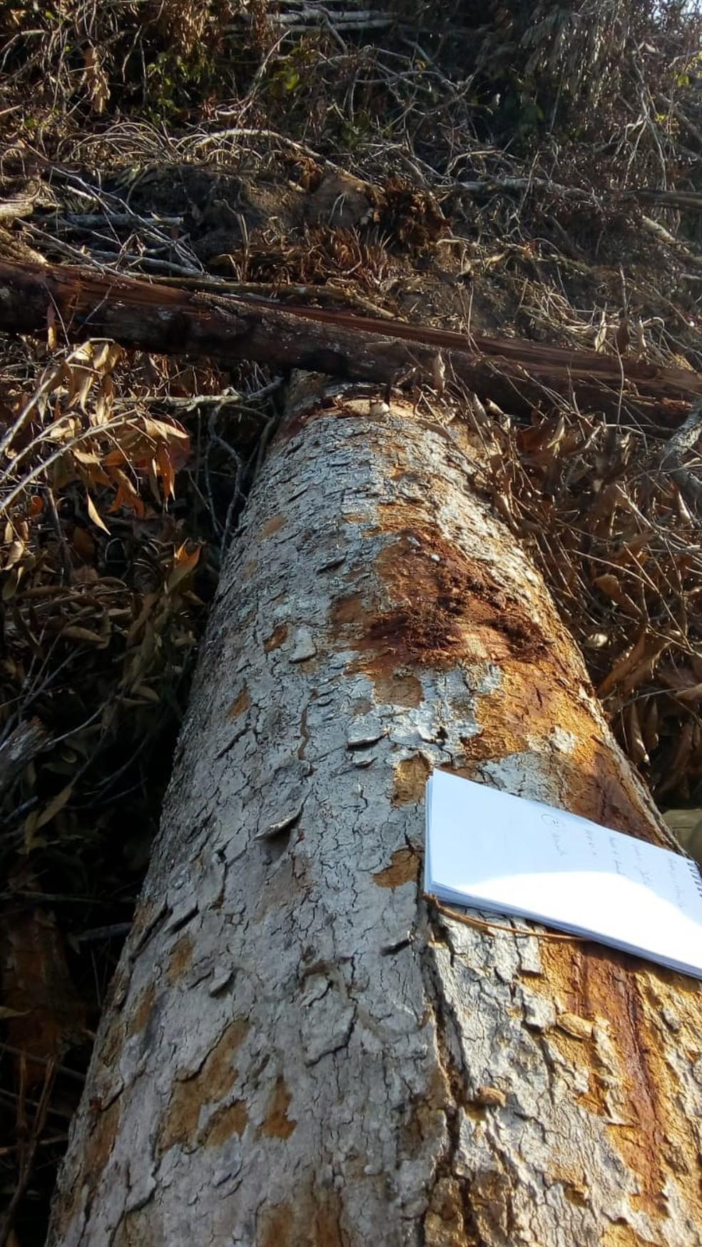Pareceres técnicos fraudavam o tipo de vegetação a ser desmatada (Foto: Ibama/Divulgação)