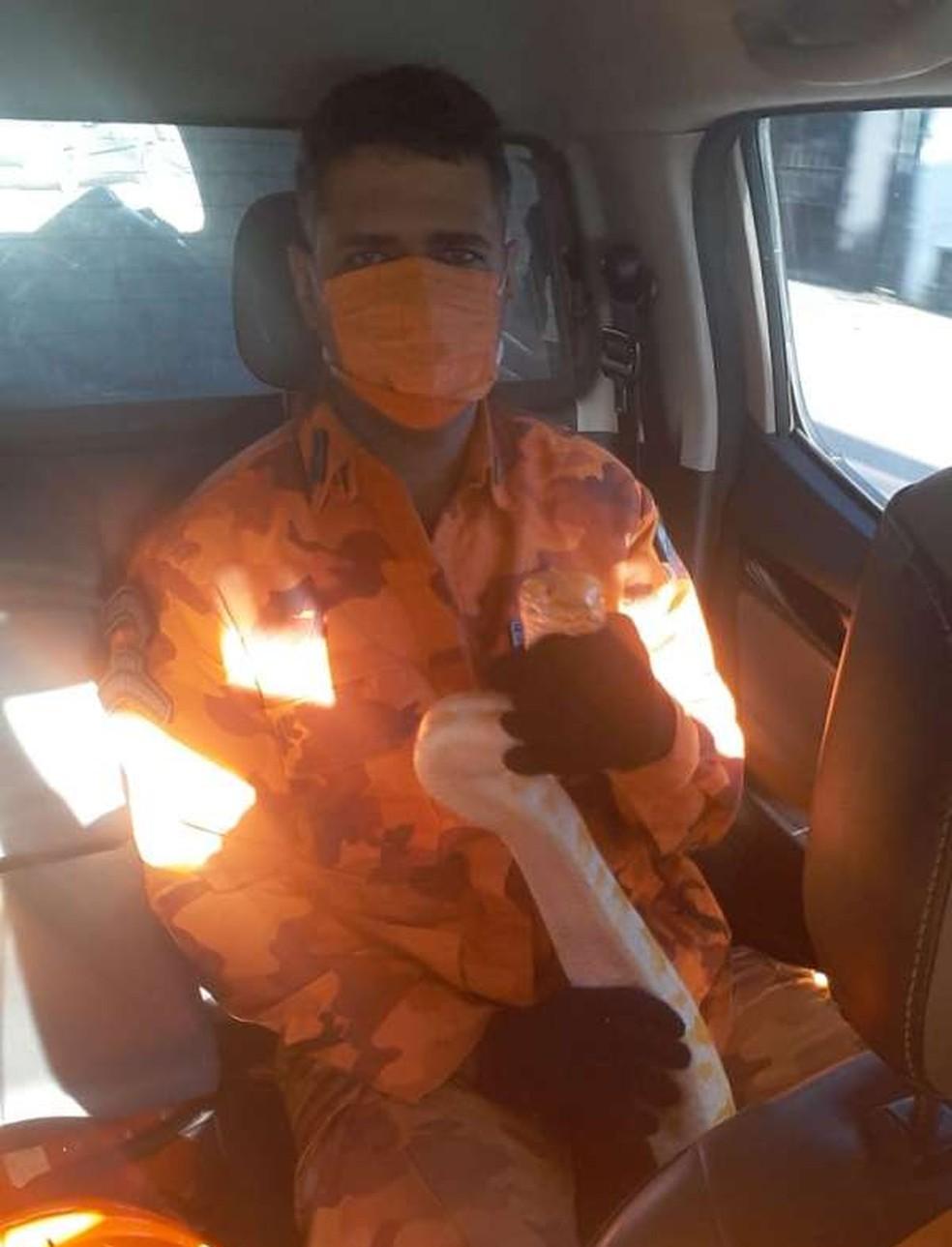 Bombeiros foram acionados e localizaram o animal — Foto: Divulgação