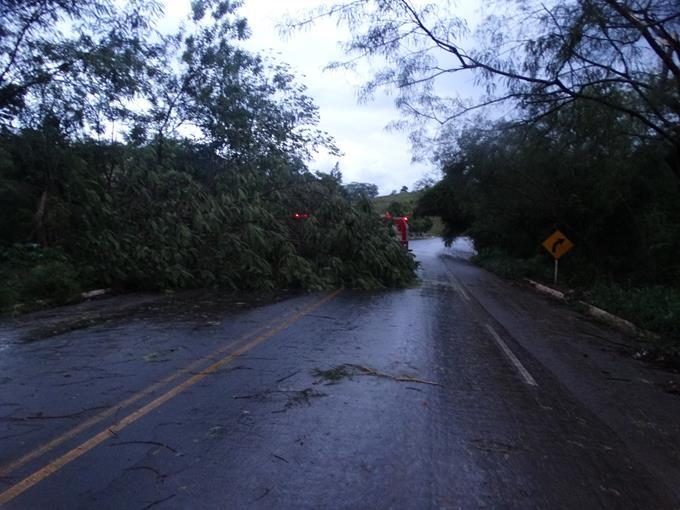 Pancadas de chuva com vento forte derrubam árvores na BR-356 em Muriaé