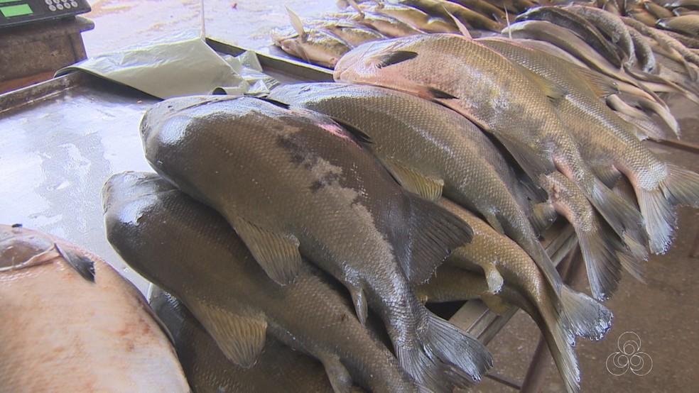 Peixe tambaqui custa R$ 5,50 em Ariquemes  (Foto: Rede Amazônica/ Reprodução)