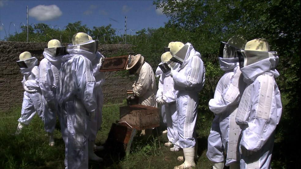 Curso técnico em apicultura em instituto federal em Pau dos Ferros, Rio Grande do Norte — Foto: Reprodução/TV Globo
