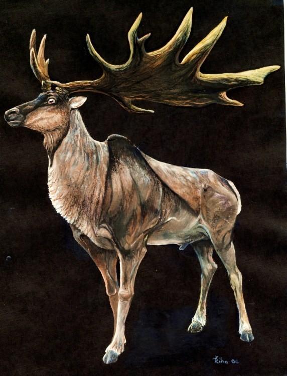 Ilustração mostra como seria um espécime do animal (Foto: Wikimedia/Pavel.Riha.CB)