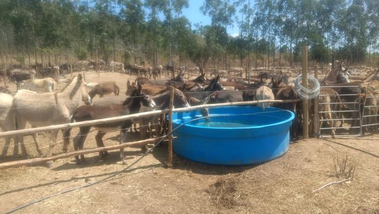 Terreno de confinamento de jumentos não tem proteção contra o sol e chuvas (Foto: Divulgação/SOS Animais Itapetinga)