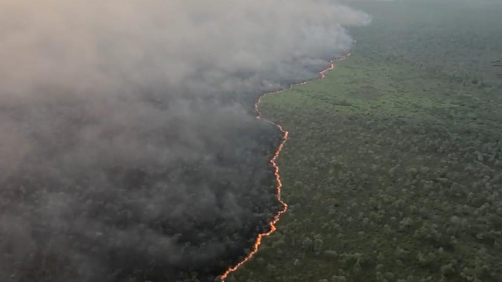 Linga de fogo no Pantanal de MS — Foto: Corpo de Bombeiros/Divulgação