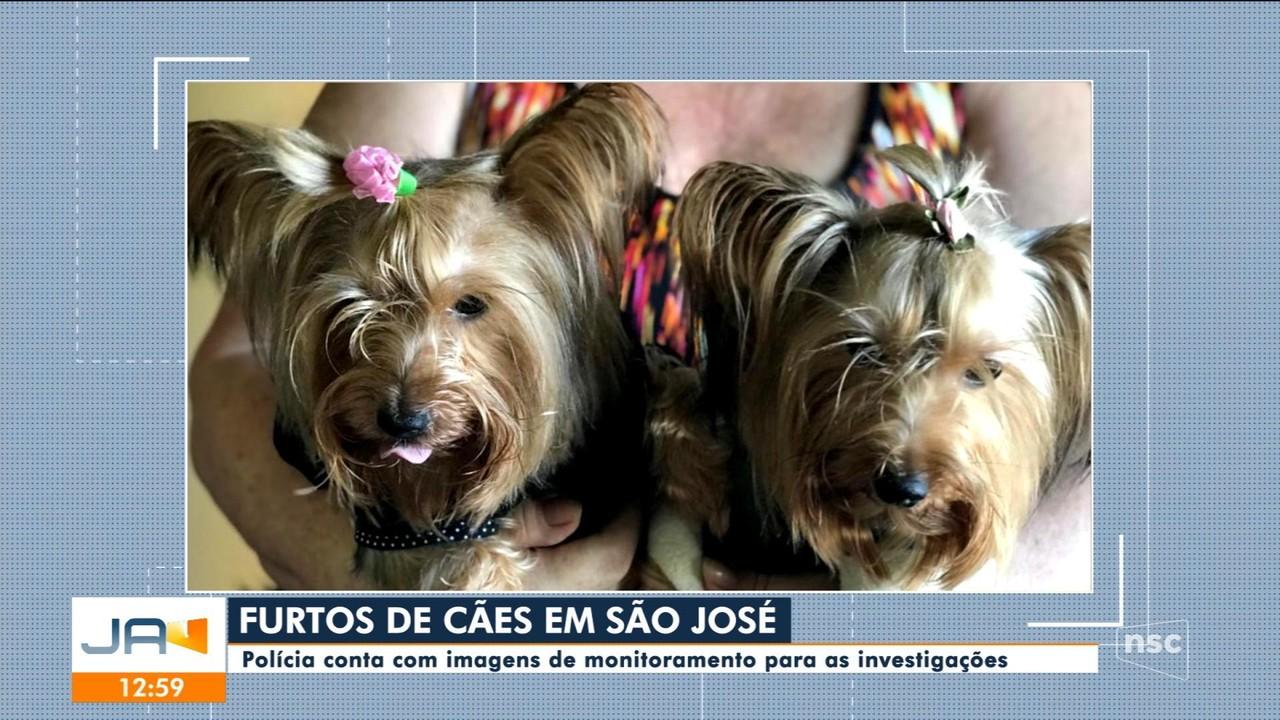 Cães são furtados em São José