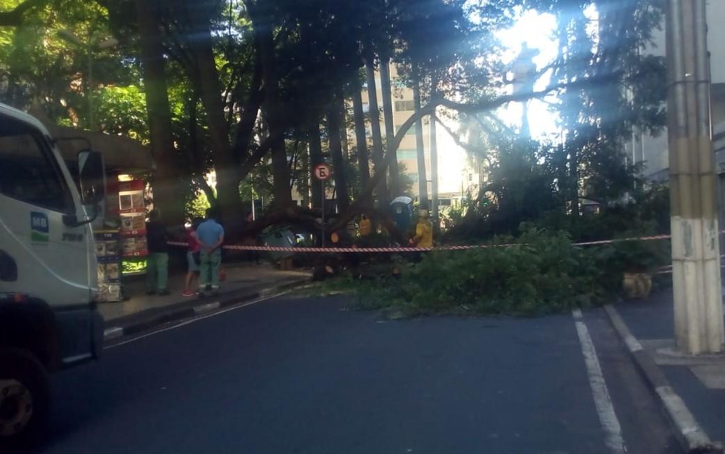 Queda de árvore na Rua Conceição bloqueia trânsito no Centro de Campinas  - Noticias