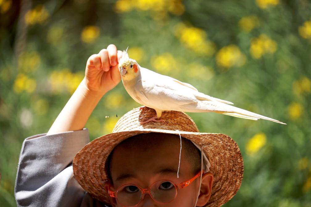 2 de maio - Um menino que vive a vida de um monge budista ao ficar em um templo como monge noviço por duas semanas alimenta um pássaro sentado em seu chapéu no parque de diversões Everland em Yongin, na Coreia do Sul — Foto: Kim Hong-Ji/Reuters