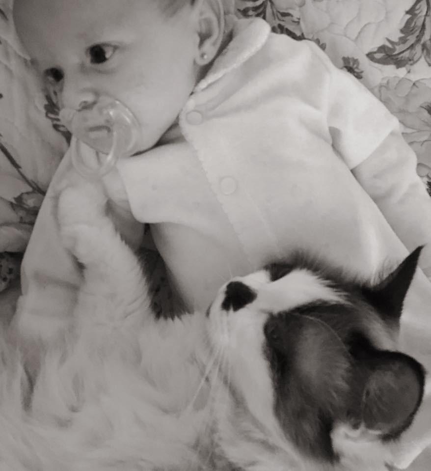 Lavinia tem uma relação próxima com os gatos (Foto: Reprodução Facebook)