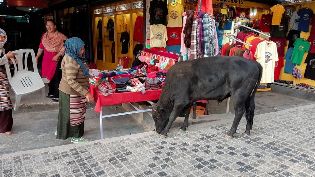 Vaca anda pelas ruas do centro de Leh, em Ladakh, na Índia (Foto: Rafael Miotto / G1)