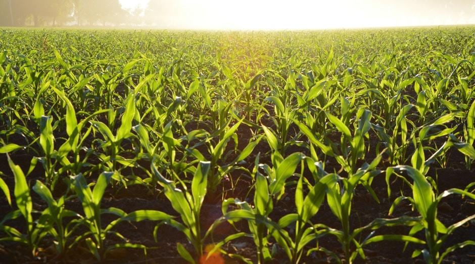 lavoura, plantacao, agricultura, agronegocio (Foto: Pexels)