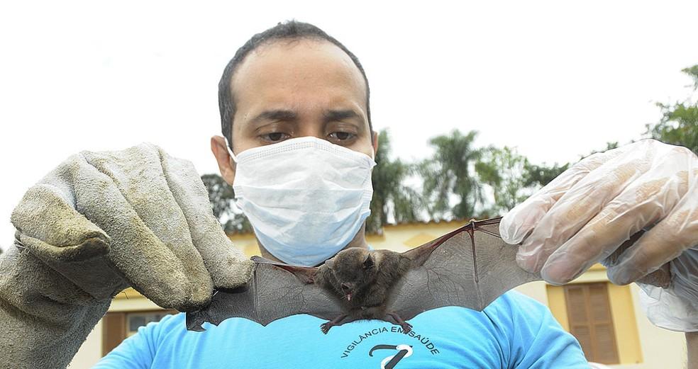 Vigilância faz pente fino na Zona Rural de Jundiaí (SP) para encontrar morcegos transmissores do vírus da raiva  (Foto: Prefeitura de Jundiaí/Divulgação)