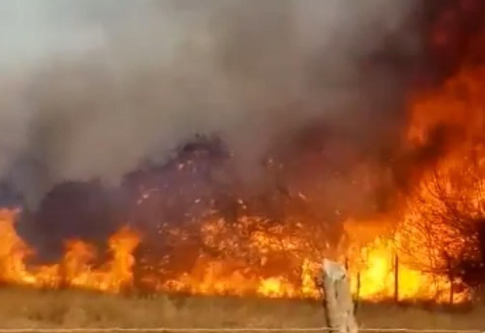 Incêndio de grande proporções atinge vegetação em Abaré — Foto: Reprodução/Redes Sociais
