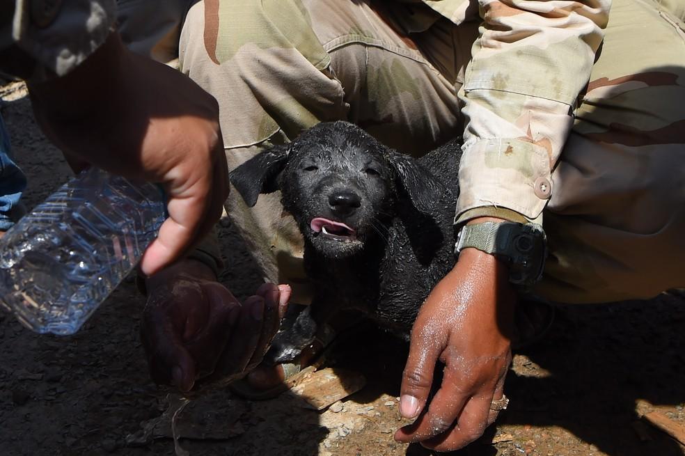 Cão é retirado nos escombros do prédio no Camboja — Foto: Tang Chhin Sothy/AFP