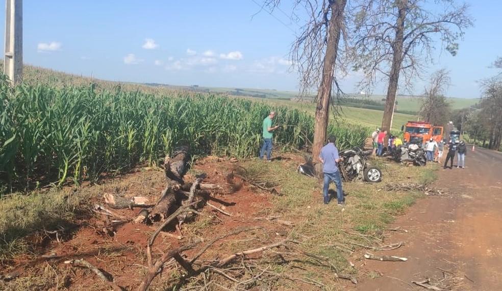O carro partiu ao meio, e a árvore foi arrancada com o impacto da batida — Foto: Genésio Roecher/Arquivo pessoal
