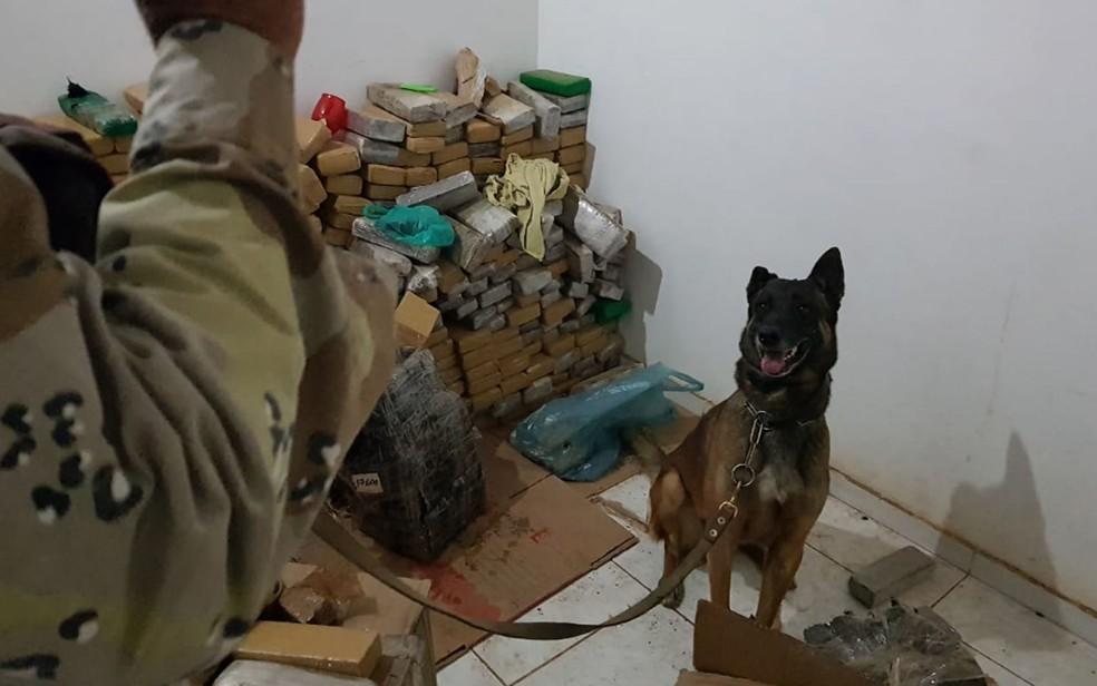 Cão farejador ajudou a encontrar droga — Foto: Polícia Militar