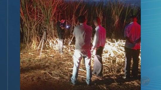 Corpo de homem é achado em canavial às margens de rodovia em Miguelópolis, SP