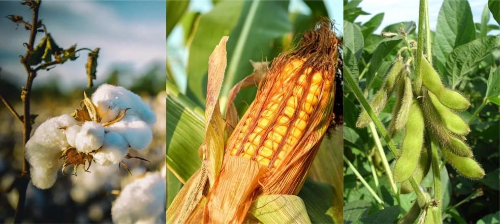 Ranking nacional de produção agrícola do Brasil está na Bahia — Foto: Divulgação/Adab