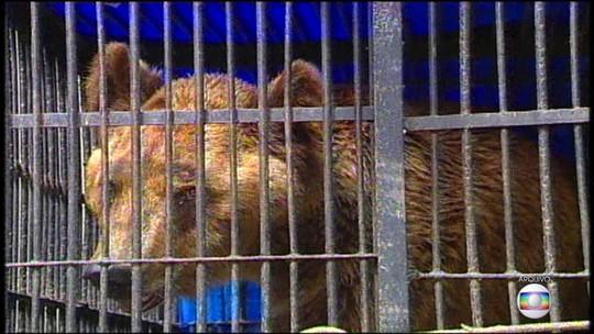 Abandonado por circo em 2004, Urso Bruno morre no Recife após infecção respiratória