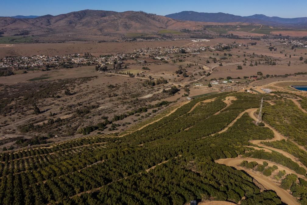 Vista aérea mostra plantações de abacate em La Ligua, na província de Petorca, região de Valparaiso, Chile, em de setembro de 2019  — Foto: Martin Bernetti / AFP