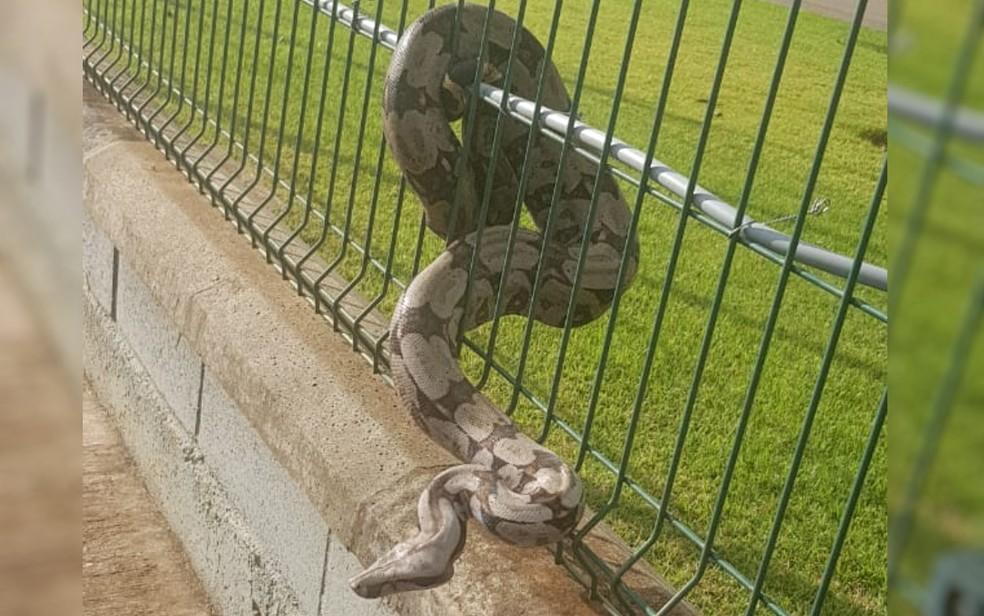 Cobra é encontrada enrolada em grade de condomínio em Anápolis