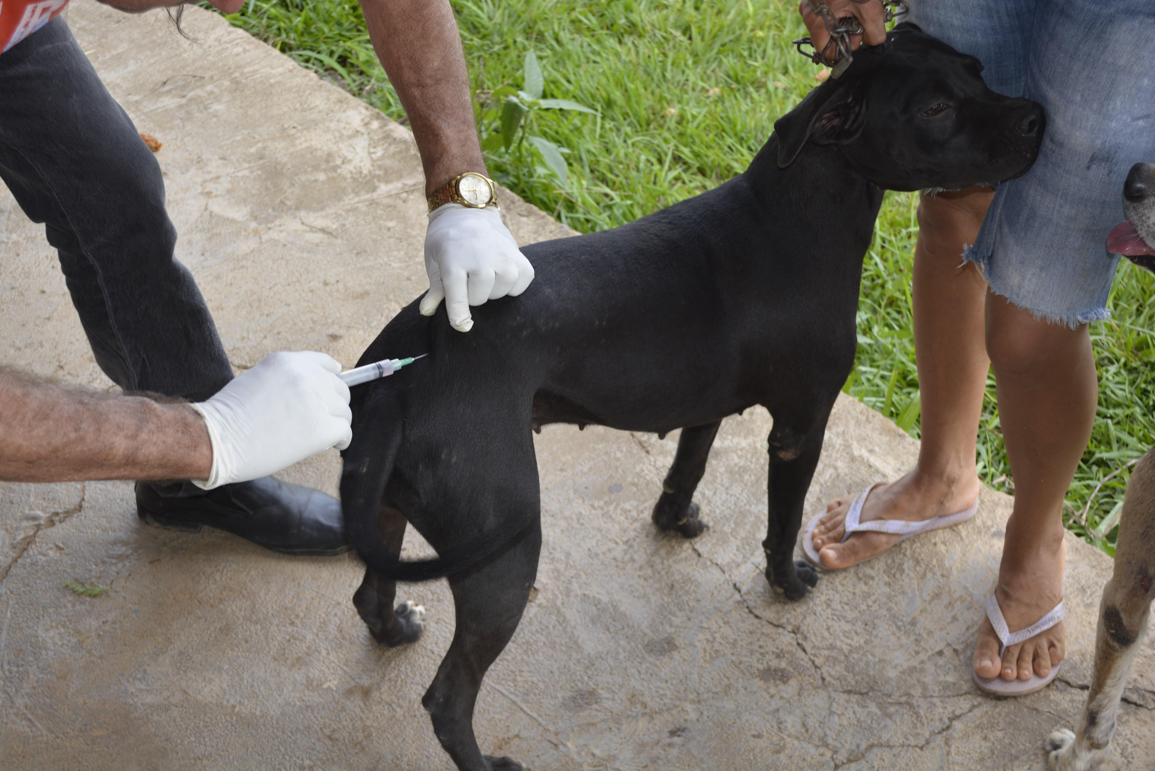 Campanha de vacinação antirrábica começa em julho em Córrego Fundo