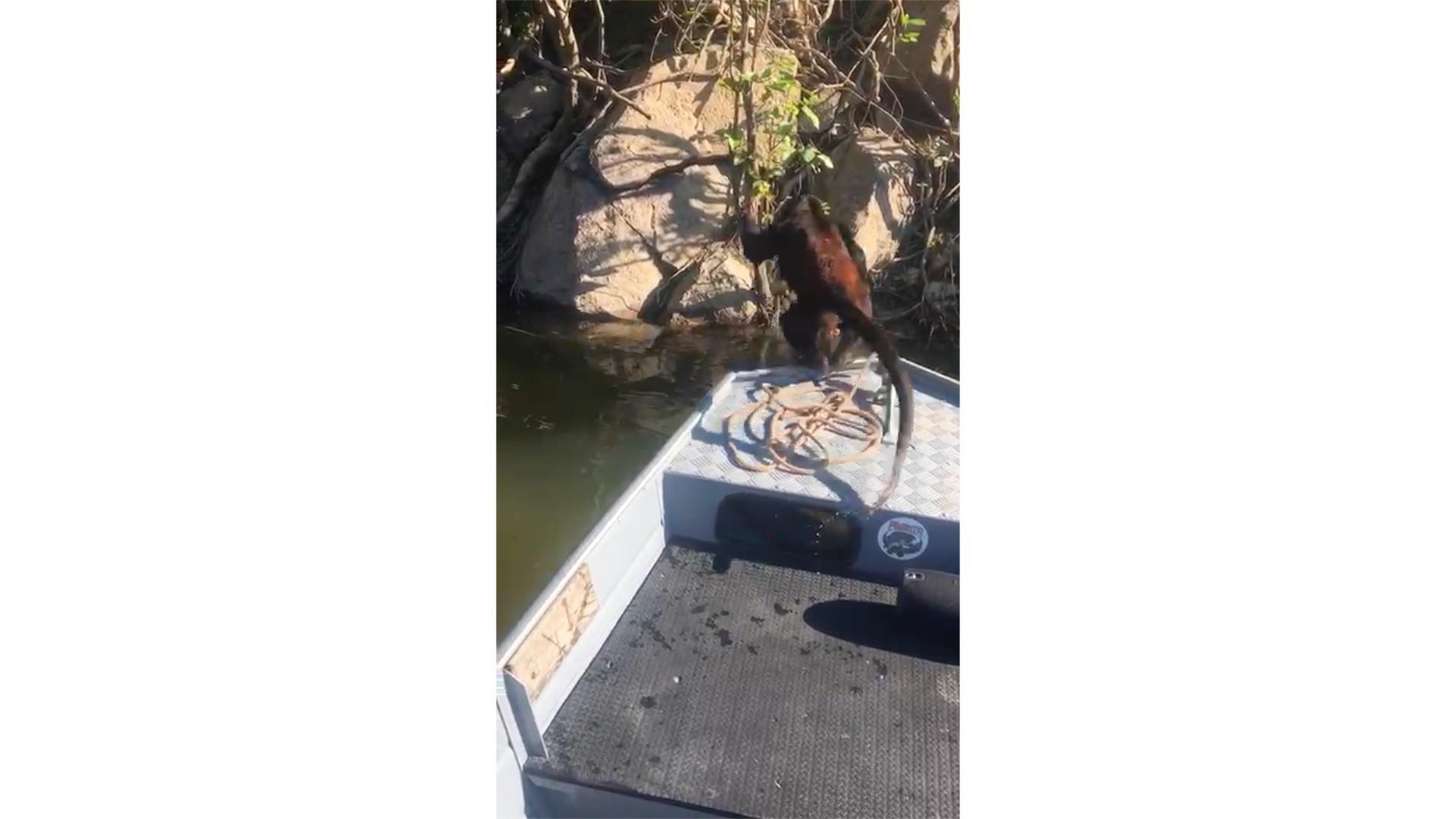 Macaco se afoga ao tentar atravessar rio e é salvo por pescadores em barco em MT; veja vídeo - Notícias - Plantão Diário