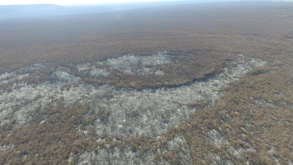 Incêndio no assentamento Novo Zabele é extinto nessa sexta-feira (10) — Foto: Divulgação /Corpo de Bombeiros