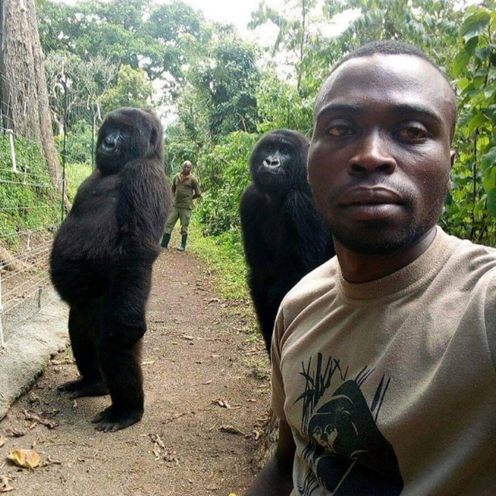 Gorilas posam com guardas florestais do parque Virunga na República Democrática do Congo — Foto: Facebook/Virunga National Park