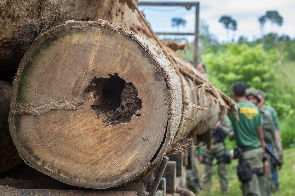Uma das medidas contra o desmatamento ilegal será o Fundo da Amazônia, que busca arrecadar recursos com países como Alemanha e Noruega. — Foto: ASCOM/IBAMA