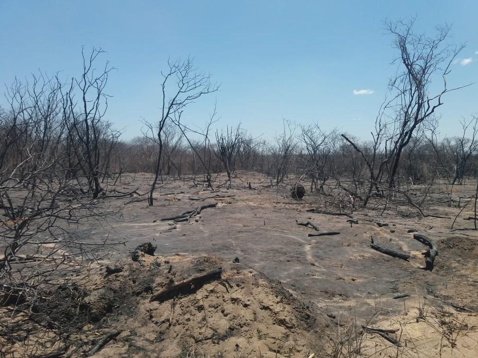 Incêndio causa danos irreparáveis à produção nas fazendas da divisa entre Ceará e Piauí, avaliam proprietários — Foto: Vandenberg Belém/SVM
