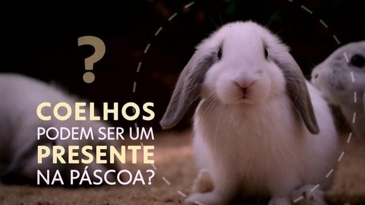 Presentear crianças com coelhos deve ser uma escolha bem pensada