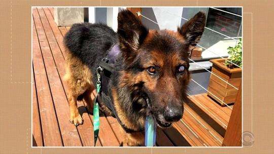 Cão agredido com pá em Santa Cruz do Sul é adotado e vai para novo lar