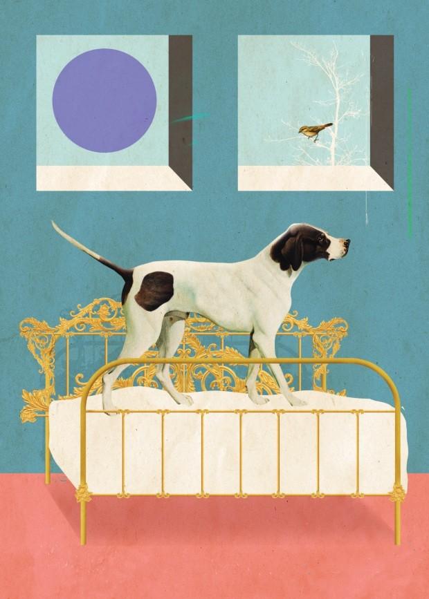Ilustração coluna A vida com pets - junho de 2018 (Foto: Ilustração Laurindo Feliciano / Editora Globo)